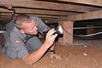pest inspections image