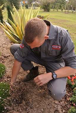 inspecting mulch termites image