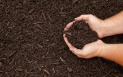 mulch attract termites resistant image