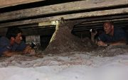do it yourself termite treatment image
