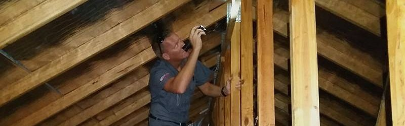 pest inspector checking termites image