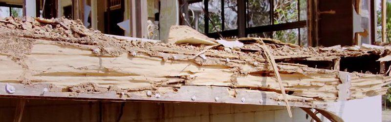 termite damage image