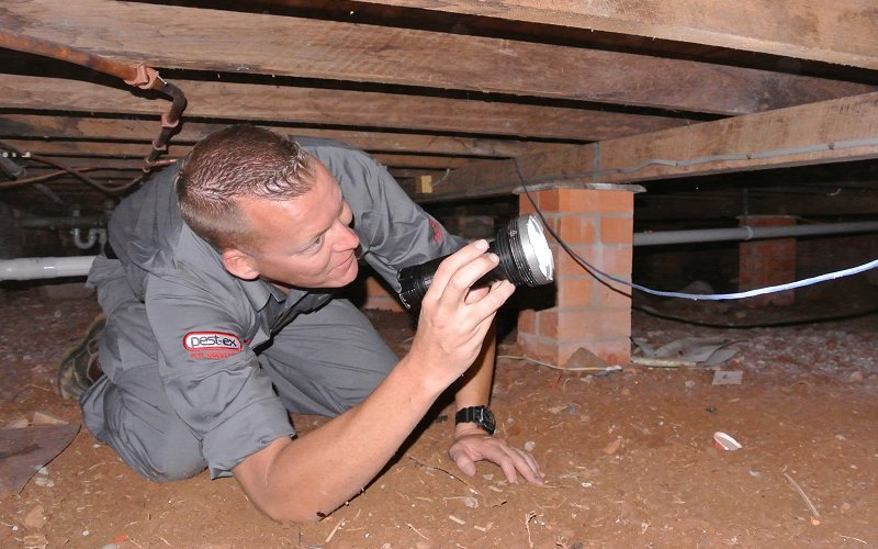 Regular termite checks protect your home