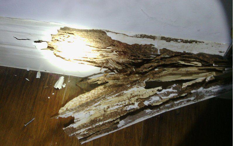 termites skirting board image