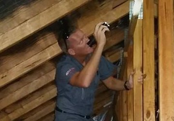building pest inspection gold coast pest image