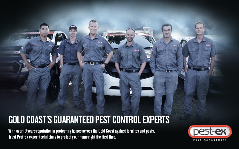 pest control gold coast image