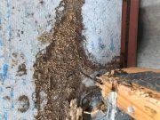 termites e1497960399333 image