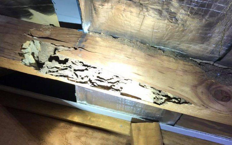 termites roof void truss image