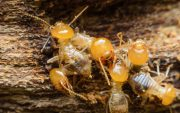 how often should get termite inspection image