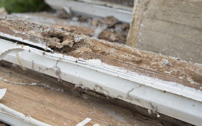 termite damage window frame image