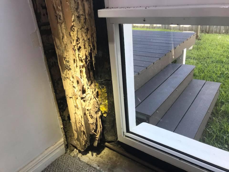 termite damage brisbane image