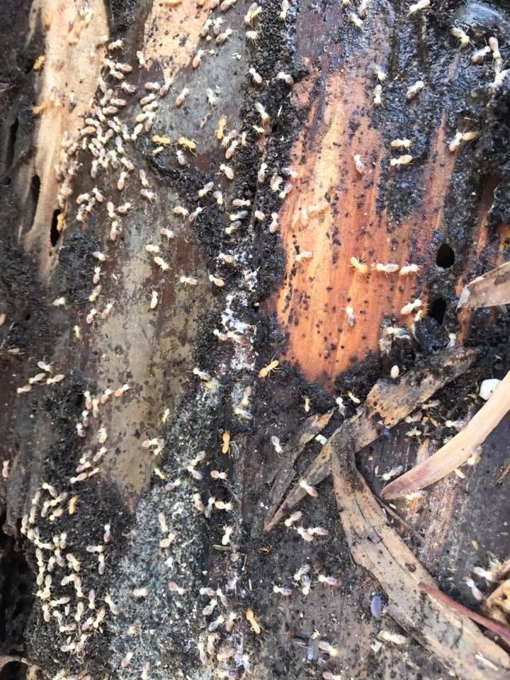 termites in brisbane bathroom image