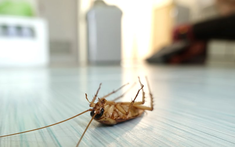 dead cockroach image
