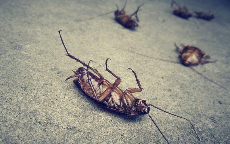 organic natural non toxic pest control image