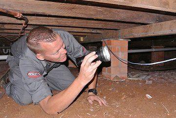 pest control bulimba image