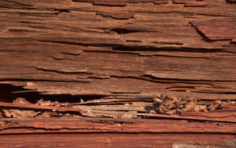 termites hardwood image