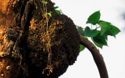 termites nest tree image