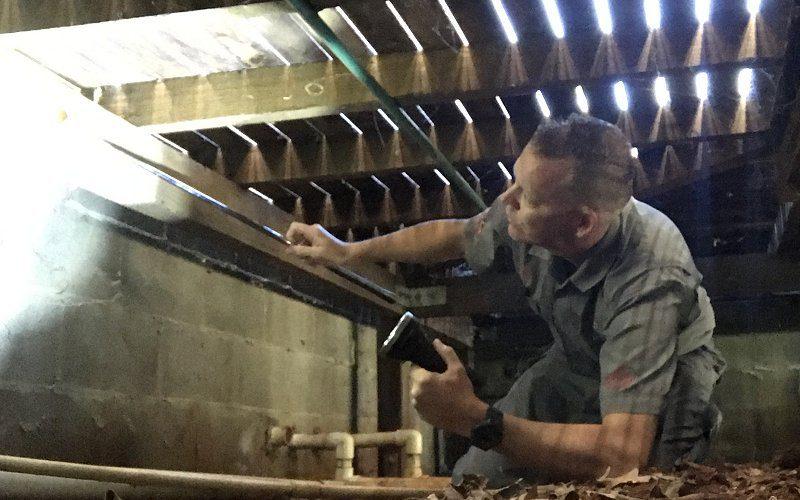 termite inspection pest image
