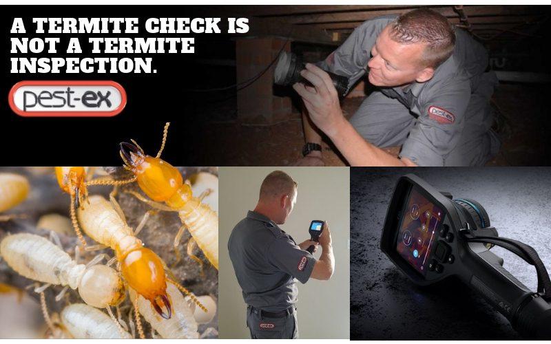 free termite check inspection pestex 1 image