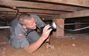 free termite check not a termite inspection image