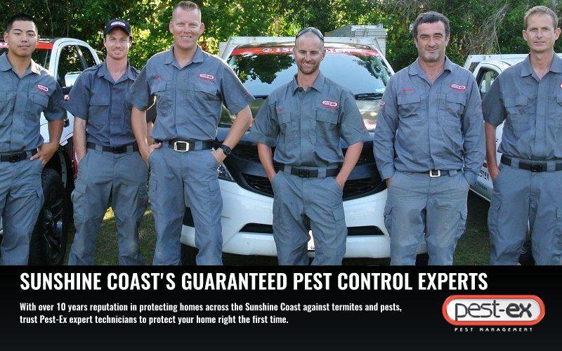 pest control sunshine coast image