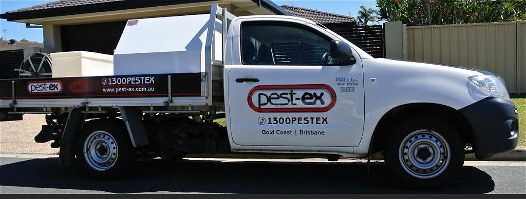pest ex sunshine coast termite treatment image