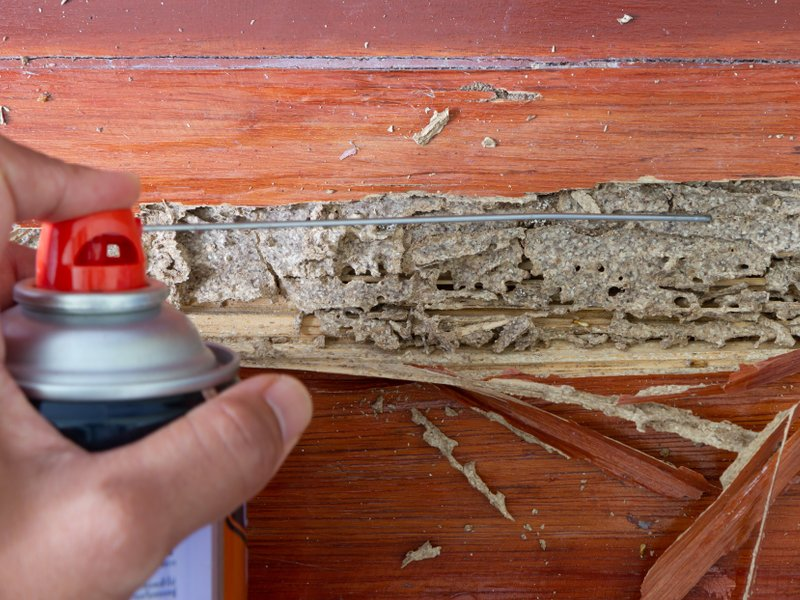 spray termites insect home remedy image