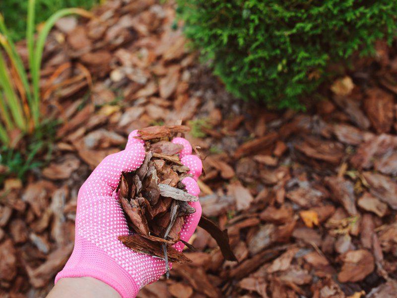 termites mulch garden image