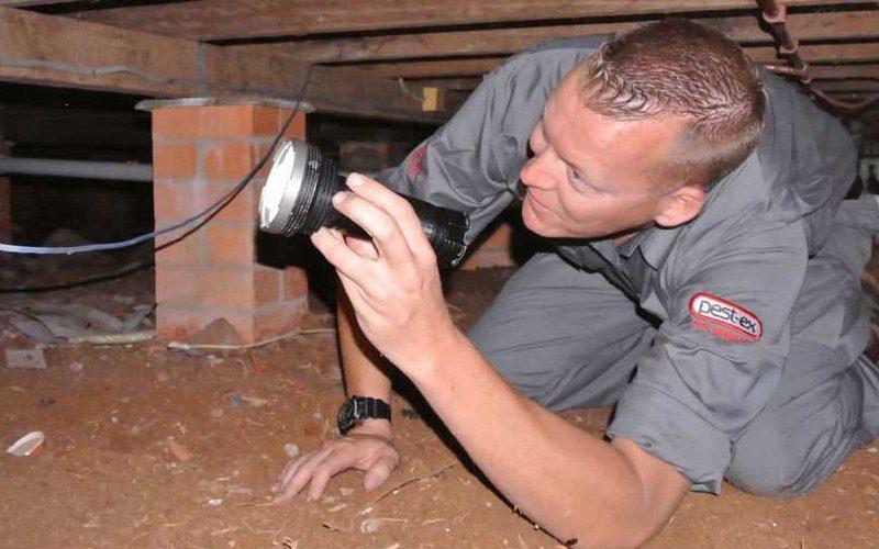 pest control wynnum image