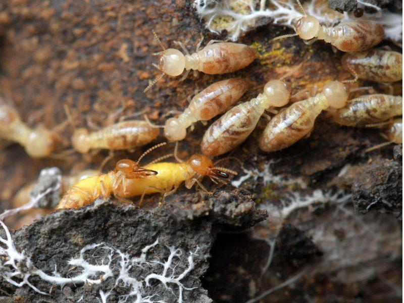 What S The Best Termite Treatment Pest Ex