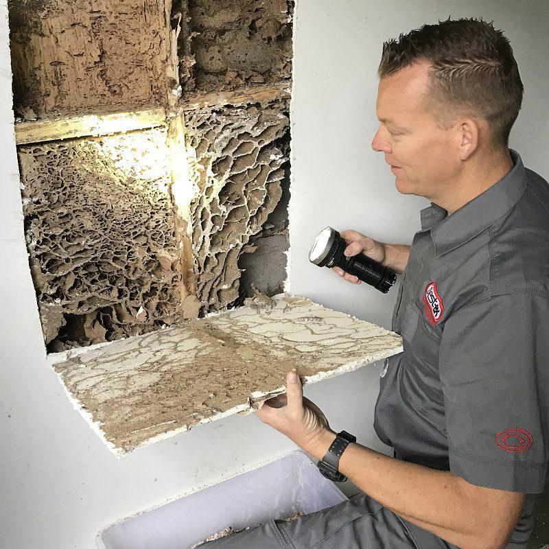 termite nest shower image