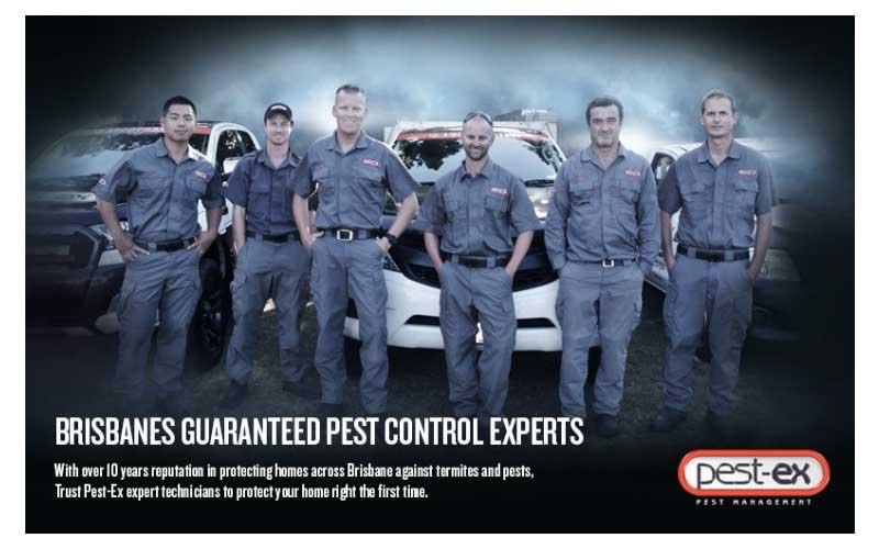 Brisbane Pest Control Termite Treatment Services Pest Ex