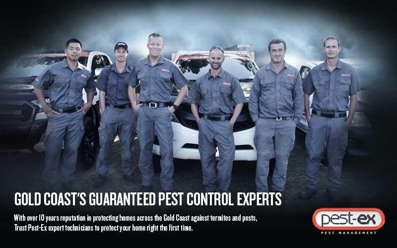 pest ex pest control gold coast