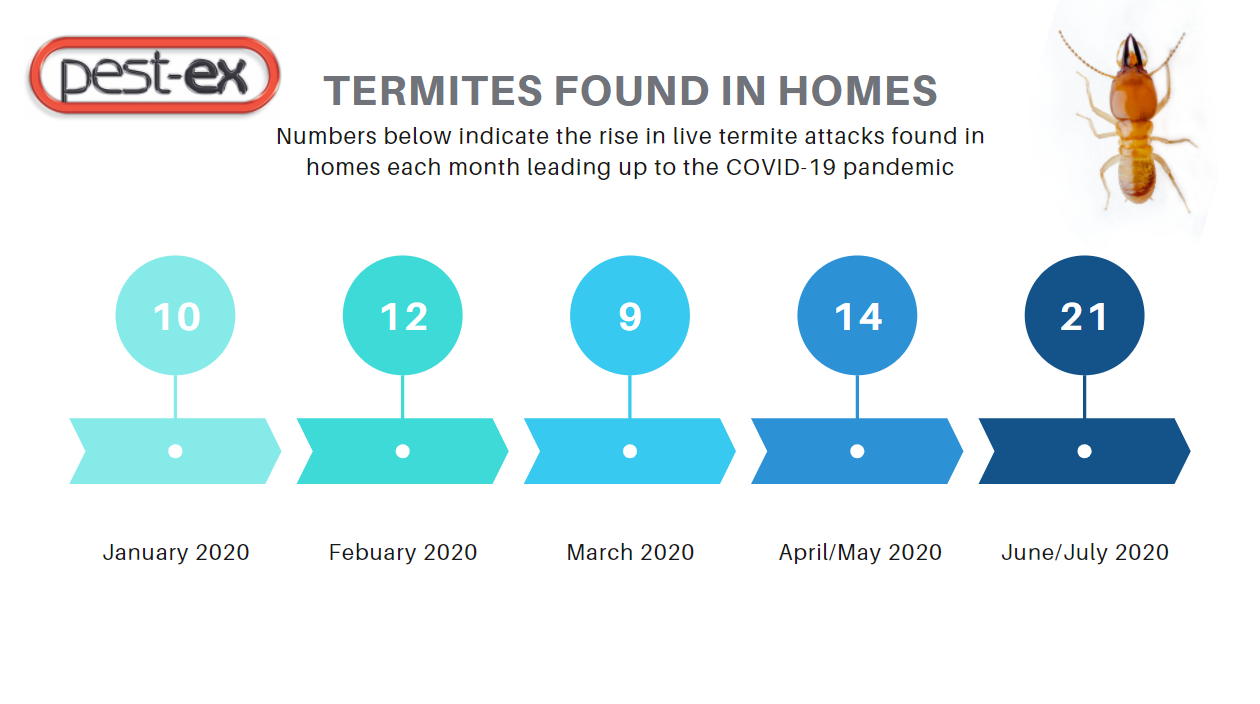 termite control increase 2020 image