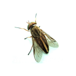 biting insects image
