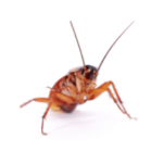 cockroaches image