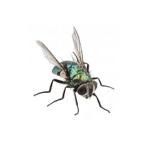 flies image