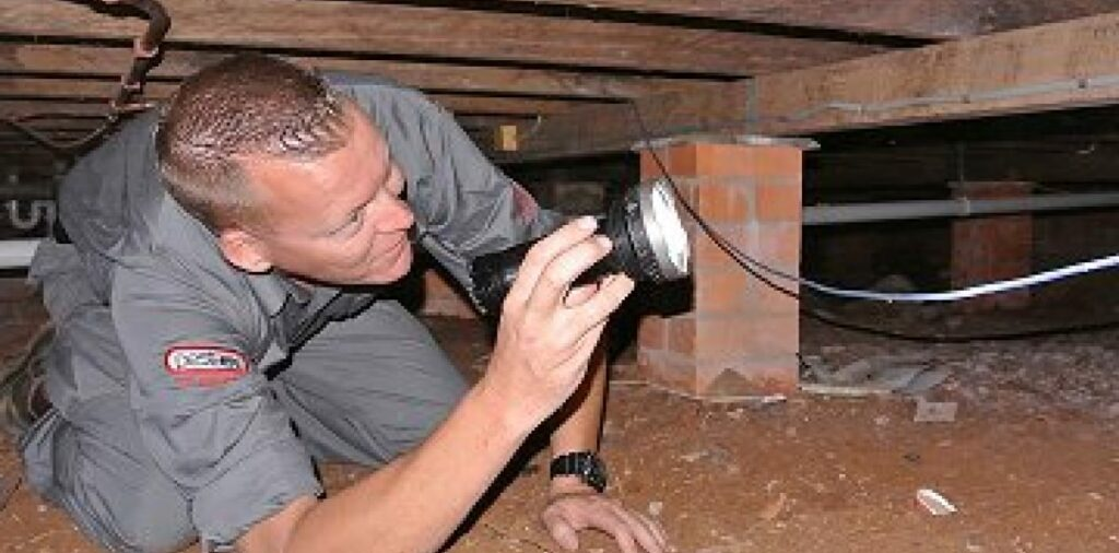 pest inspections 1@2x image