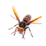 wasps image