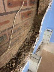 Christine Termite Damage horror story
