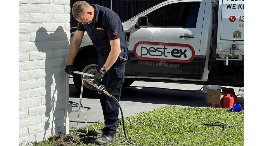 Termite Treatment by Pest Ex Pest Management
